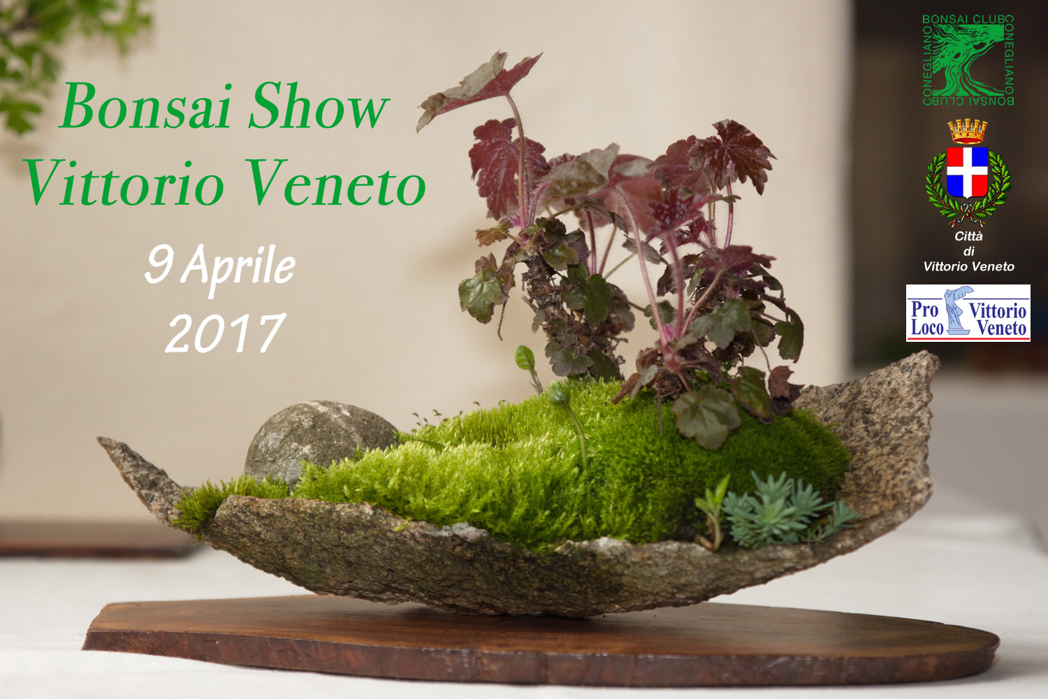 Bonsai Show a Vittorio Veneto 2017 - Bonsai Club Conegliano