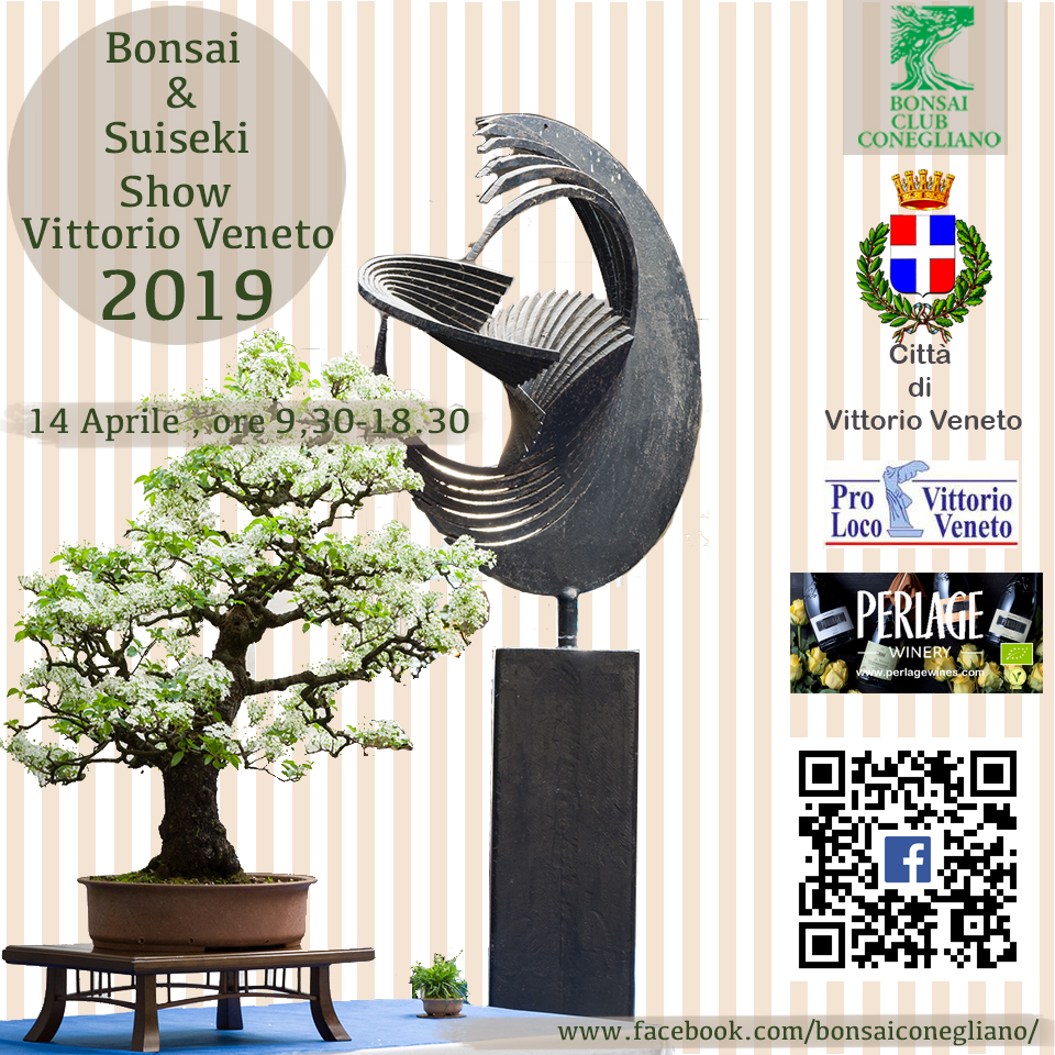 Bonsai Show a Vittorio Veneto 2019